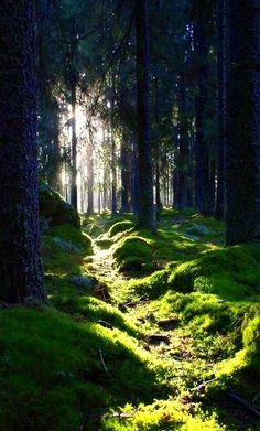 Love walking in the woods, or deep into a forest. The smells, the sights and sounds! It's like you enter a new world. Escape! 💚