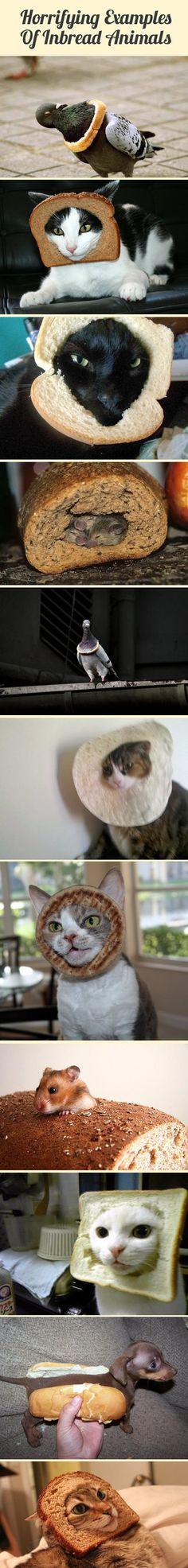 Horrifying examples of inbread animals.
