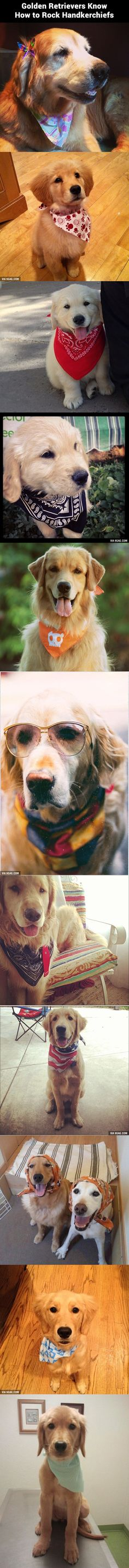 These Golden Retrievers Know How to Rock Handkerchiefs. Makes me want to get My kiddo some hankies!! :)