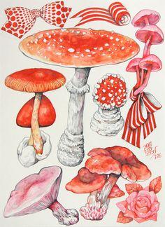 He mushroom bow Vintage Botanical Prints, Botanical Drawings, Botanical Art, Botanical Illustration, Illustration Art, Illustrations, Mushroom Art, Environmental Art, Art Inspo
