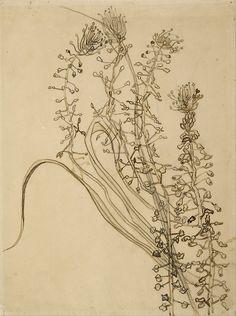 Tassel Hyacinth (1889) by Vincent van Gogh (1853–1890). Van Gogh Museum Google Art Project: Home via Wikimedia