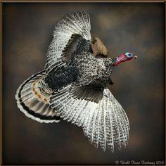 Taxidermy Decor, Taxidermy Display, Bird Taxidermy, Deer Hunting Decor, Duck Hunting, Turkey Hunting, Turkey Mounts, Duck Mount, Deer Mounts