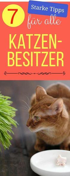 Die 7 genialsten Tipps für Katzenbesitzer | Haushaltsfee.org