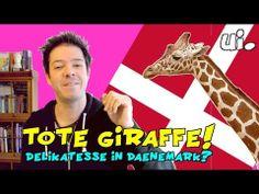 Tote Giraffe! Delikatesse in Dänemark? ui!