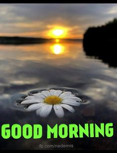 good morning gif message with sunrise over sea Good Morning Beautiful Pictures, Good Morning Image Quotes, Good Morning Flowers, Good Morning Picture, Good Morning Messages, Good Morning Greetings, Good Morning Good Night, Morning Pictures, Good Morning Wishes