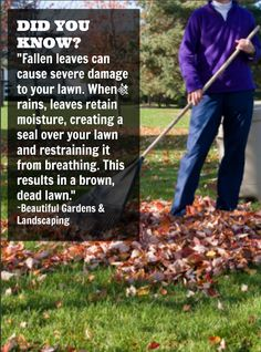 Fallen leaves are not only aesthetically unappealing, but they can also cause real damage to your lawn.