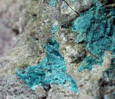 Shubnikovite, Ca2Cu8(AsO4)6Cl(OH)•7(H2O),  Khovu-Aksy Ni-Co deposit, Tuva Republic, Eastern-Siberian Region, Russia. Aqua-colored masses on matrix. Fov 0.3 cm. Excalibur Mineral Company specimen. Copyright: © 2009, JGW