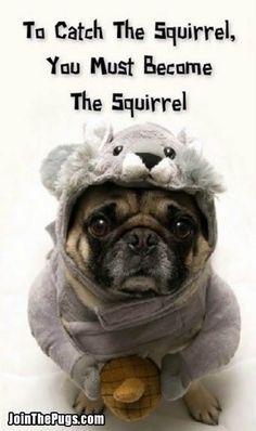 Thank you @Bailey Francine Francine Francine Francine Francine Puggins The Pug for sharing with us on Pinterest!