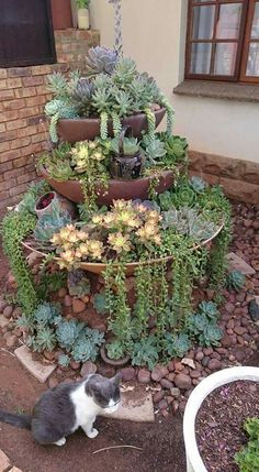 new garden for succulents. Old fountain, new garden for succulents. Old fountain, new garden for succulents.Old fountain, new garden for succulents. Old fountain, new garden for succulents. Succulent Landscaping, Succulent Gardening, Cacti And Succulents, Planting Succulents, Container Gardening, Garden Landscaping, Garden Terrarium, Succulent Rock Garden, Cactus Plants