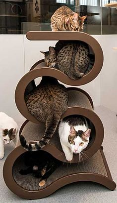 Cool cat tree for cool cats Cool Cats, Cool Cat Trees, I Love Cats, Crazy Cats, Cat Magazine, Cat Room, Here Kitty Kitty, Kitty Cats, Cat Furniture
