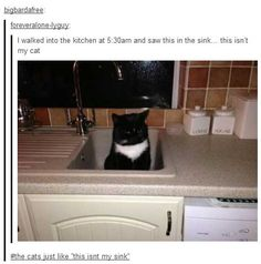 funny tumblr photo comments  cat