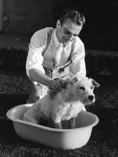 James Cagney bathes fur-faced friend.