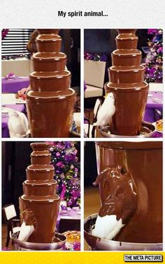 More Chocolate Please