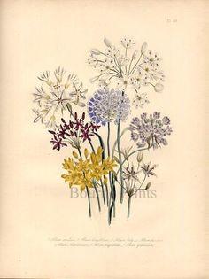 Summer Woodland Bouquet Print by deborahmcghie on Etsy, $95.00