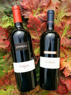 Terral i Boria Sumarroca #penedes #winelover #vinotinto #redwine #sumarroca #winelovers