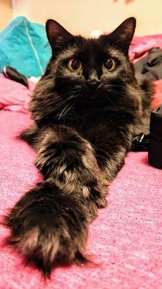 krásne Teen čierna mačička