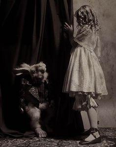 Alice found the white rabbit?