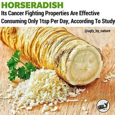According to the University of Illinois College of Agricultural Consumer and Environmental Sciences (ACES) horseradish contains cancer-fighting compounds known as glucosinolates. Glucosinolate type and quantity vary depending on size and quality of the horseradish root. For the first time the activation of cancer-fighting enzymes by glucosinolate products in horseradish has been documented.  A recent University of Illinois study shows that it contains compounds that could help detoxify and…