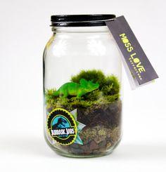 Dinosaur Moss Terrarium by MossLoveTerrariums on Etsy, $20.00