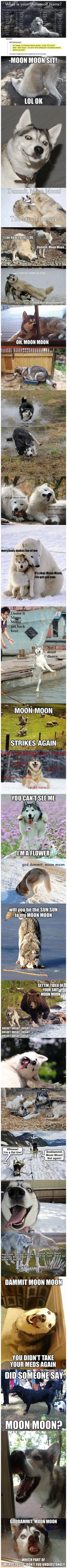 Funny Pictures brought to you by LolSnaps. Constant updates of the best funny pictures on the web. Can't Stop Laughing, Funny Husky Pictures, Funny Pictures Hilarious, Funny Pins, The Funny, Moon Moon, Mine Meme, Majestic Names, Laugh Out Loud
