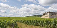 Top 7 Wine Experiences in Burgundy