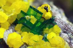 MINERAL MICROCOSM Torbernite (green) & Phosphuranylite (yellow) From Shinkolobwe Mine in the Katanga province of the Democratic Republic of the Congo. FOV 7 mm. Collection: Domenico Preite. Photo: Matteo Chinellato.