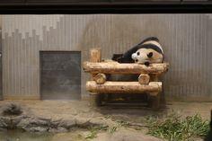 2011/6/12 上野動物園@東京