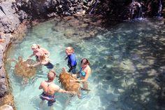 Turtle Encounter » Coral World. St. Thomas, USVI