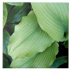 Bright Green Leaves Ceramic Tile #trivets #plants #nature #kitchendecor #homedecor