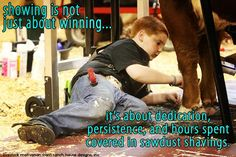Show season starts this week.... Good luck to all that are dedicated to get down in the sawdust and shavings.