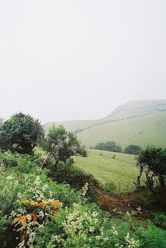 Summer Drizzle on Cornish Fields. Hillside near St Austell, Cornwall, looking down towards the sea.