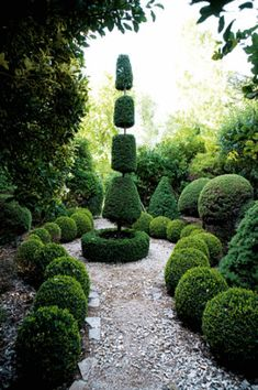 Ethereal garden with topiary centerpiece.
