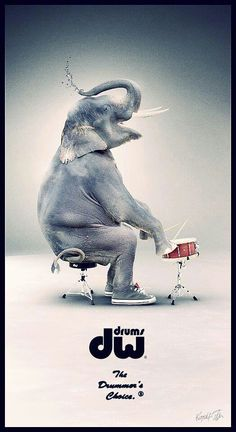 DW magazine ad is intriguing... though I can't see why an elephant shooting water out its trunk quite uses the marketing costly advertising space to explain why DW is great. But-- would be a fun humor ad for drummer stools that can stand any size musician. And for huge sneakers that fit even this mammal's feet! #DdO:) MOST #POPULAR RE-PINS - https://www.pinterest.com/claxtonw/humor-pics/ - HUMOR PICS #Elephants #Drum #stools