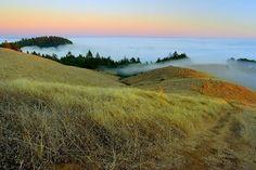 """From desert to forest"" , Mt. Tamalpais, Marin County, California"