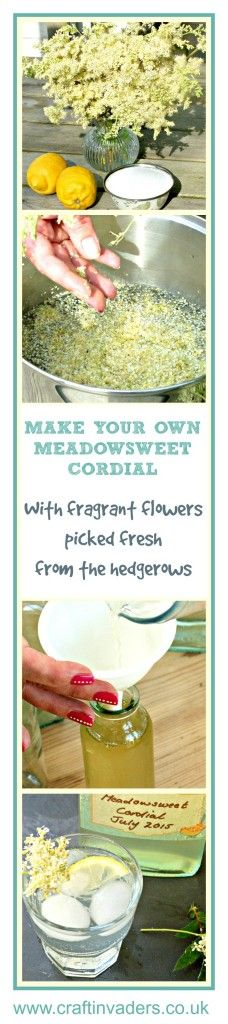 Fabulous recipe for Meadowsweet Cordial, wonderfully refreshing and made with foraged ingredients