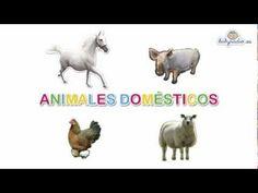 Animales Domésticos para los de 1r y 2do grados