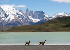 Wild Alpacas (or llamas??) in Argentina « Seekyt