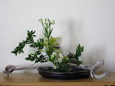 The Ikenobo School is the oldest school of Ikebana or Japanese flower  arranging dating from the 15th century.  Based in Kyoto, the traditio...