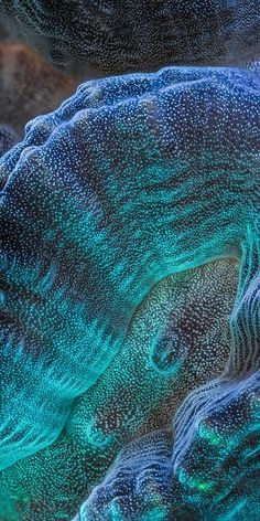 Maze coral. The sea is an amazing place! How many mermaids agree?