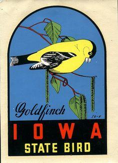 Iowa State Bird Goldfinch