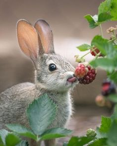 Today's share-cute Bunny - Page 16 of 22 - Gloria Love Pets Wildlife Photography, Animal Photography, Canon Photography, Adventure Photography, Baby Lizards, Baby Animals, Cute Animals, Funny Animals, Rabbit Eating