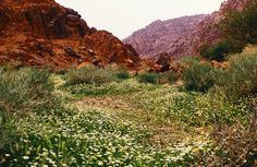 The scenic countryside in Hail, Saudi Arabia to become part of the largest eco-park in the Middle East.