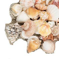 Vase Filler, Natural Beach Seashells Mix, 2.2 lb. bag, Mu... https://www.amazon.com/dp/B01CJ53T2E/ref=cm_sw_r_pi_dp_P8aFxb2S8W2BB