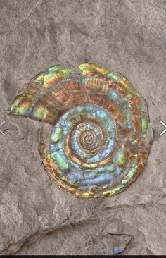 Ammonite for Easter!
