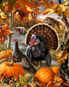 Jigsaw Puzzle Seasonal Thanksgiving Gobbler Farm 1000 pieces NEW Made in the USA in Toys & Hobbies, Puzzles, Contemporary Puzzles Thanksgiving Pictures, Thanksgiving Wallpaper, Vintage Thanksgiving, Fall Pictures, Thanksgiving Crafts, Thanksgiving Decorations, Thanksgiving Quotes, Fall Images, Holiday Wallpaper