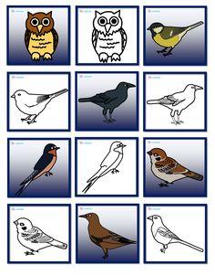 Ptáci - pexeso