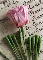 Rose Stems for Preserved Roses