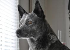 amazing dog... Cutter