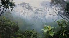 Maquipucuna Cloud Forest, Ecuador