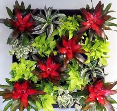Living Wall-- Add Some Vibrant Color to your Office Space... Find out how by going to www.evergreenti.com